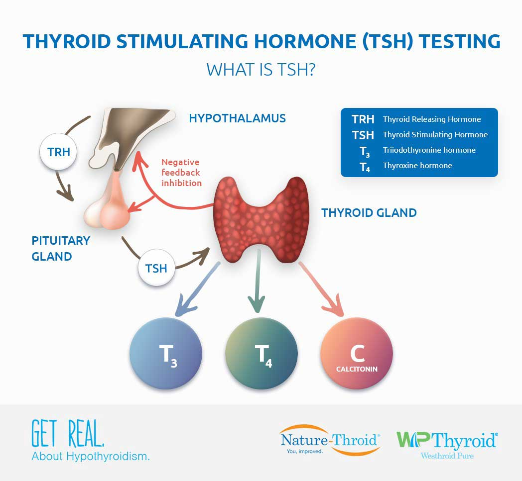 Thyroid Stimulating Hormone Tsh Testing Tsh Test